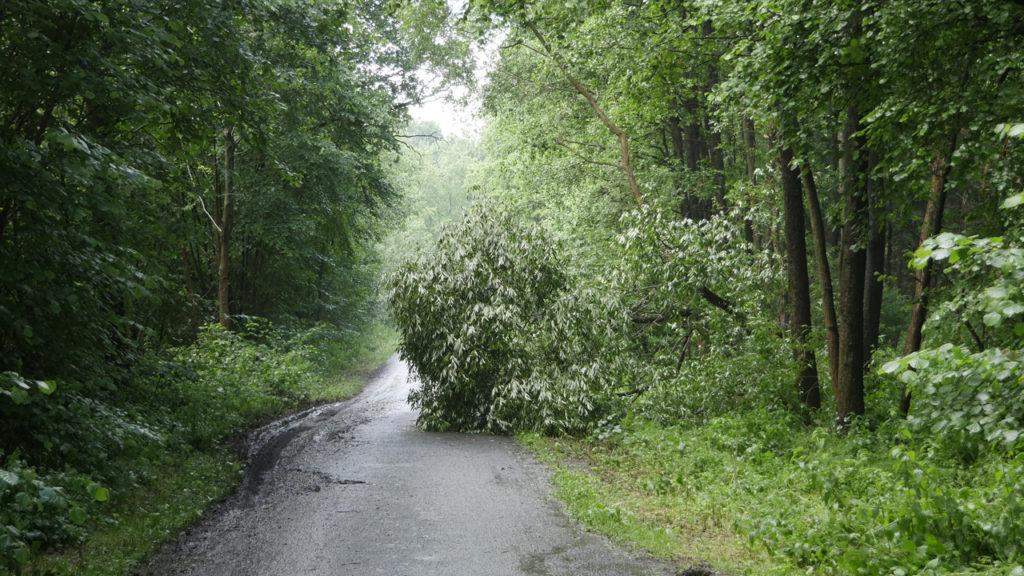 Gewitter mit Starkregen und orkanartigen Windböen